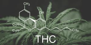 Cannabis Metabolites