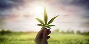 6 Factors that Influence How Long Cannabis Stays in Your System